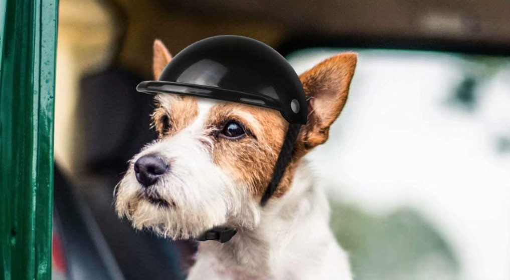 Best Dog Motorcycle Helmet